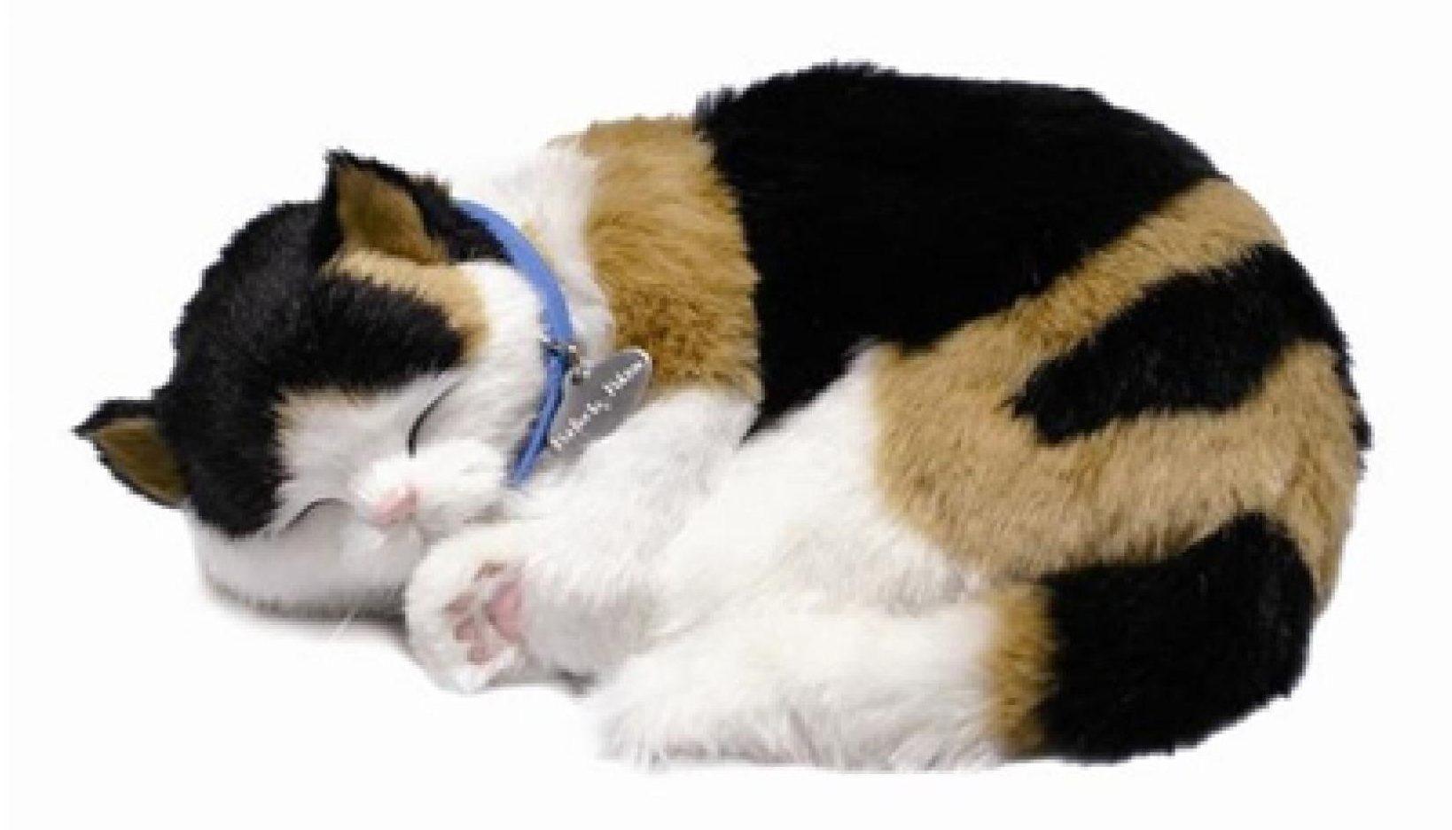 pet companion for dementia